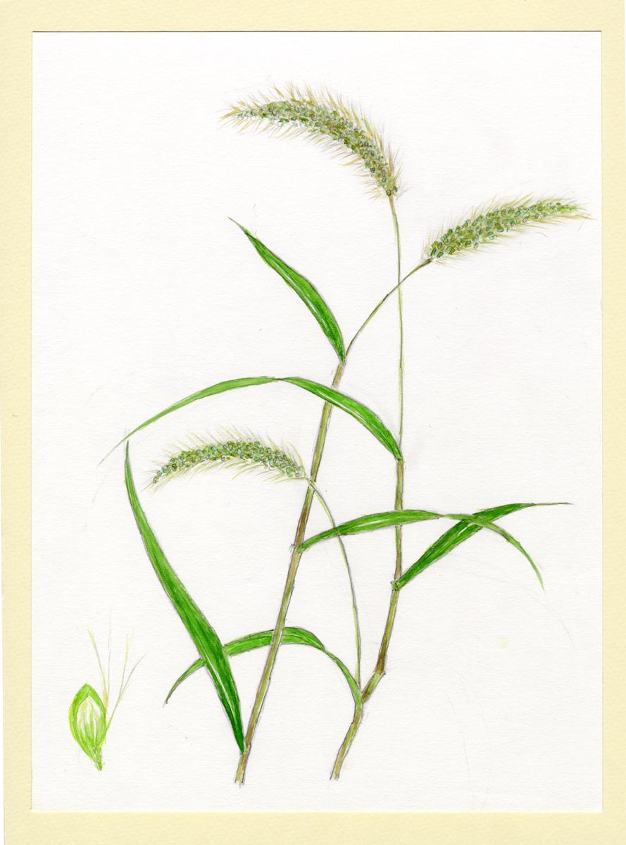 第63回植物画作品